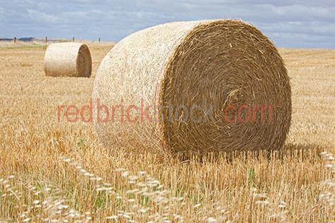hay;hay bale;hay bales;farm;farms;farming;australian farm;australian farms;australian farming;australian farming industry;farmland;farmlands;farm land;farm lands;farming property;farming properties;paddock;paddocks;cow paddock;farm paddock;farm paddocks;farming paddock;farming paddocks;on farm;at farm; country;countryside;country setting;country settings;australian country;australian countryside;rural;rural area;rural areas;rural setting;rural settings;rural australia;  regional;regional australia; grass;grasses;dry grass;dry grasses;rolled hay;rolled hay bale;rolled hay bales;hay crop;hay crops;crop;crops;farming crop;farming crops;farm crop;farm crops;harvested crop;harvest crops;cattle feed;cow feed;cattle food;cow food;horse feed;horse food;day;daytime;day time;during the day;daylight;day light;australia;australian;aus;victoria;victorian;vic;close-up;close-ups;close up;close ups;closeup;closeups;close-up view;close-up views;closeup view;closeup views;close-up views;close-up views;close up views;closeup views;copyspace;copy space;textspace;text space