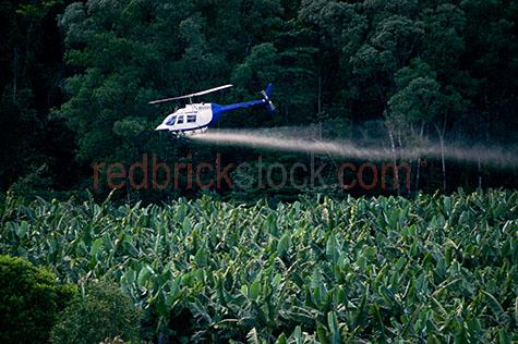 farm crop crops farmland banana plantation spraying spray pestic