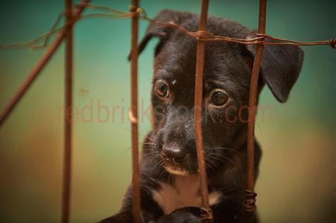 dog; dogs; hound; hounds; canine; canines; animal; animals; homeless dogs; neglected dogs; abandoned dogs; street dogs; bali street dogs; animal welfare; animal shelter; animal refuge; animal rescue; mans best friend; bali;