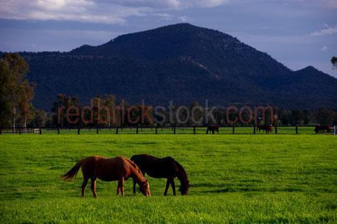 horse; horses; animal; animals; equine; equines; horse stud; horse studs; stud; studs; horse stud farm; horse stud farms; stud farm; stud farms;graze; grazes; grazing; horse grazing; horses grazing;eating grass; horse eating grass; horses eating grass; pasture; pastures; lush; lush pasture; lush pastures;paddock; paddocks; horse paddock; horse paddocks; horse in paddock; horses in paddock; horses in paddocks; horse in a paddock; horses in a paddock; farm paddock; farm paddocks; farming paddock; farming paddocks; field; fields; lush field; lush fields; horse yard; horse yards; yard; yards;farm animal; farm animals; farm; farms; farming; farming industry;australian farm; australian farms; australian farming; australian farming industry; farmland; farmlands; farm land; farm lands; farming property; farming properties;on farm; on the farm; horse on farm; horses on farm; horse on the farm; horses on the farm; animal on farm; animals on farm; animal on the farm; animals on the farm; at farm;at the farm; horse at farm; horses at farm; horse at the farm; horses at the farm; animal at farm; animals at farm; animal at the farm; animals at the farm; equestrian centre; equestrian centres;landscapes; australian landscape; australian landscapes; country; countryside; country setting; country settings; australian country; australian countryside; rural; rural area; rural areas; rural setting; rural settings; rural australia; regional; regional australia;livestock; live stock; stock; mammal; mammals; australian mammal; australian mammals;pet; pets; pet horse; pet horses; pet animal; pet animals; equine; equine flu; equine influenza; horse flu; animal photography; nature; green grass; green grasses; grass; grasses; lush green grass; lush green grasses; fence; fences; fenced; fenced paddock; fenced paddocks; fenceline; fencelines; fence line; fence lines; mountain; mountains; mountainous; mountain range; mountain ranges; agriculture; agricultural; agriculture industry; agricultural in
