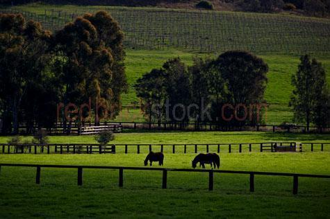 horse; horses; animal; animals; equine; equines; horse stud; horse studs; stud; studs; horse stud farm; horse stud farms; stud farm; stud farms;graze; grazes; grazing; horse grazing; horses grazing;eating grass; horse eating grass; horses eating grass; pasture; pastures; lush; lush pasture; lush pastures;paddock; paddocks; horse paddock; horse paddocks; horse in paddock; horses in paddock; horses in paddocks; horse in a paddock; horses in a paddock; farm paddock; farm paddocks; farming paddock; farming paddocks; field; fields; lush field; lush fields; horse yard; horse yards; yard; yards;farm animal; farm animals; farm; farms; farming; farming industry;australian farm; australian farms; australian farming; australian farming industry; farmland; farmlands; farm land; farm lands; farming property; farming properties;on farm; on the farm; horse on farm; horses on farm; horse on the farm; horses on the farm; animal on farm; animals on farm; animal on the farm; animals on the farm; at farm;at the farm; horse at farm; horses at farm; horse at the farm; horses at the farm; animal at farm; animals at farm; animal at the farm; animals at the farm; equestrian centre; equestrian centres;country; countryside; country setting; country settings; australian country; australian countryside; rural; rural area; rural areas; rural setting; rural settings; rural australia; regional; regional australia;livestock; live stock; stock; mammal; mammals; australian mammal; australian mammals;pet; pets; pet horse; pet horses; pet animal; pet animals; equine; equine flu; equine influenza; horse flu; animal photography; nature; green grass; green grasses; grass; grasses; lush green grass; lush green grasses; fence; fences; fenced; fenced paddock; fenced paddocks; fenceline; fencelines; fence line; fence lines; mountain; mountains; mountainous; mountain range; mountain ranges; hill; hills; hillside; hill side; hilly; agriculture; agricultural; agriculture industry; agricultural industry; australi