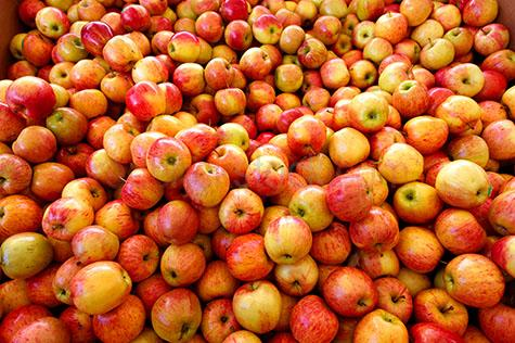 apples;apple;red apple;red apples;fruit;fruits;food;fresh;harvest;harvested;market;markets;fruit market;fruit markets;famer's market;farmer's markets;farmers market;farmers markets;close up apples;close-up apples;close ups;close-ups;crop;crops;healthy;health