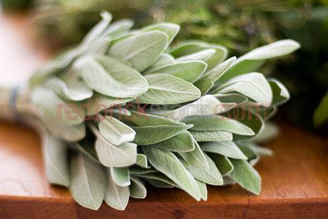herb;herbs;leaf;leaves;fresh;freshness;leaf;leaves;flavour;flavours;flavor;flavors;flavoring;flavouring;herbal;plant;plants;ingredient;ingredients;selective focus;sage;sages;selective focus;fresh;produce;kitchen;kitchens;home;homes;house;houses