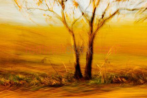 tree panned pan trees movement moving warm yellow earth tone ton