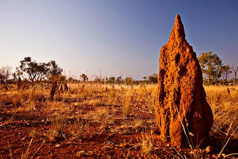termite mound;termite mounds;termites;australia;australian;outback;bush;landscape;landscapes;country;countryside;dry;arid;parched;harsh;hot;heat;sunburnt;environment;plains;grasses;australian outback;blue sky;blue skies;late afternoon;early morning;close-up;closeup;20061101_AUST_0458