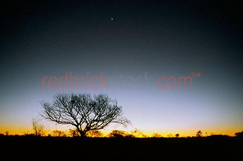 tree;trees;outback;desert;silhouette;silhouetted;eveing;glow;sunset;nest;aussie;flora;native