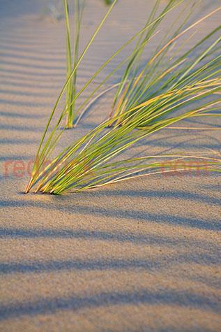 grass plant;grass plants;seasgrass;sea grass;nature;landscape;landscapes;beach;beaches;coast;coasts;coastal;desert;deserts;sand;sands;sand dune;sand dunes;dune;dunes;seaside;sea side;coastline;coastlines;coast line;coast lines;patter;patterns;texture;textures;shore;shores;reed;reeds;seashore;seashores;sea shore;sea shores