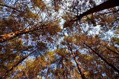 forest;forests;tree;trees;nature;getaway;natural;outdoor;outdoors;foliage;trunk;trunks;environment;environmental;wilderness;canopy;canopies;plant;plants;high angle;high angles;flora;grow;growth;growing;vegetation;leaf;leaves;israel;jerusalem;middle east;middle eastern;wood;woods;branch;branches;leaves;leaf;national park;national parks;woodland;woodlands;wilderness