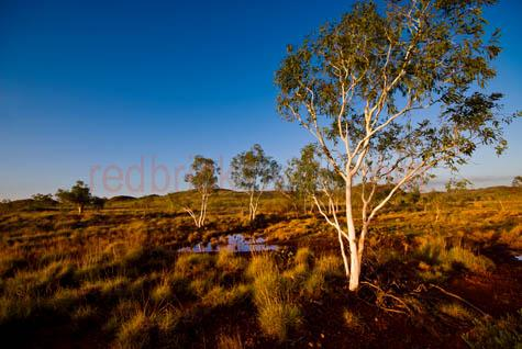 landscape;landscapes;national park;outback;australia;pilbara;tree;trees;western australia;wa;billabong;dam;empty;karijina;red;blue sky;daytime;day;early motning;late afternoon;sun;reflections;eucalypt;eucalypts;waterhole;watering hole;pond;grasses;desert grasses;copyspace;copy space;textspace;text space;CO23609