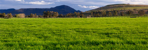 grass;grasses;green grass;green grasses;paddock;paddocks;field;fields;pasture;pastures;lush;hill;hills;mountain range;mountain ranges;panorama;panoramic;landscape;landscapes;fence;trees;no animals;day;daytime;day time;cloud;clouds;background;backgrounds;cgi;cgi background;2d cgi plate;2d cgi plates