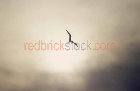 silouette;bird;flying;stormy;sky;storm;
