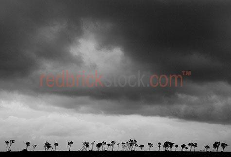 silhouetted trees;silhouettes;black and white;b&w;storm clouds;cloud;outback landscape;tree;trees