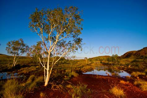 landscape;landscapes;national park;outback;australia;pilbara;tree;trees;western australia;wa;billabong;dam;empty;karijina;red;blue sky;daytime;day;early motning;late afternoon;sun;reflections;eucalypt;eucalypts;waterhole;watering hole;pond;grasses;desert grasses;copyspace;copy space;textspace;text space;C01_4270