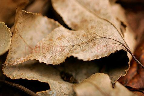 leaf;leaves;brown leaf;brown leaves;dead leaf;dead leaves;autumn leaf;autumn leaves;autumn;autumn time;season;seasons;fallen leaf;fallen leaves;maple leaf;maple leaves;maple tree leaf;maple tree leaves;maple tree;maple trees;close-up;close-ups;close up;close ups;closeup;closeups;close-up view;close-up views;closeup view;closeup views;close-up views;close-up view's;close up views;closeup views;warm tone;warm tones;pile;piles;piled;pile of leaves;pile of autumn leaves;pile of brown leaves;pile of dead leaves;pile of maple leaves;pile of maple tree leaves;piles of leaves;piles of autumn leaves;piles of brown leaves;piles of dead leaves;piles of maple leaves;piles of maple tree leaves;piled leaves;piled autumn leaves;piled brown leaves;piled dead leaves;piled maple leaves;piled maple tree leaves;pile of dry leaves;piles of dry leaves;piled dry leaves;pile of dried leaves;piles of dried leaves;piled dried leaves;vein;veins;stem;stems;leaf stem;leaf stems;brown;browns;colour brown;color brown;dry;dried;dry leaf;dry leaves;dried leaf;dried leaves;dried up