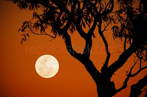 full moon silhouette tree sunset outback bush australia australi