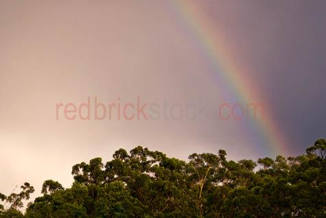 rainbow;rainbows;sky;skies;overcast;storm;storms;stormy;stormy sky;stormy skies;rain;rainy;rains;sun shower;sunshower;sun showers;sunshowers;clearing rain;rain clearing;changing weather;weather changing;weather change;weather;trees;treetops;eucalyptus;eucalyptus trees;gum trees;gum tree;australia;australian;australian weather;environment;australian environment;transition;transitions;transitioning;textspace;text space;copy space;copyspace