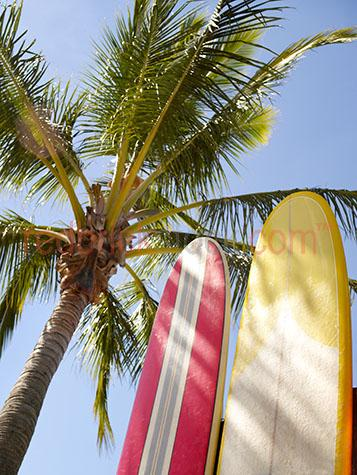 surf;surfboard;surfboards;board;boards;surfing;palm;palms;tree;trees;summer;coastal lifestyle;island;islands;beach;beaches