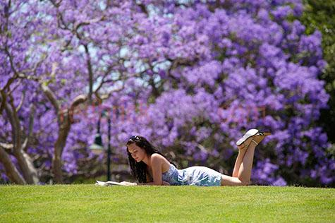 girl reading in park;girl lying in grass;lying in the grass;lying on grass;reading;reading a novel;reading a book;girl reading a book;jacaranda;jacarandas in bloom;jacaranda's in bloom;jacaranda in bloom;new farm park;newarm park;parks;relaxing in the sun;relaxing in a park;summer;spring;girl relaxing in the park;reading books;girl wearing a summer dress;young woman;woman reading;woman reading a book;woman lying in park;woman lying in grass;woman enjoying the sun