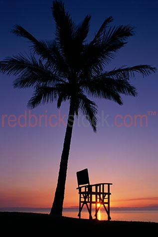 deck chair under palm tree at sunset island resort holiday relax
