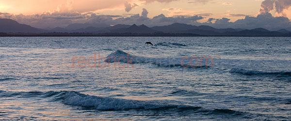 dolphin;dolphins;leaping out of wave;waves;beach;beaches;dolphin at beach;coastal lifestyle;sunset over the beach