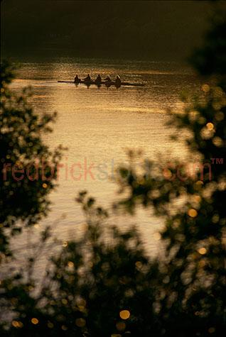 rowers rowing river sport brisbane water lake sport sunrise suns