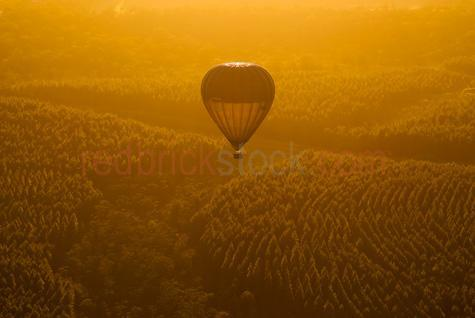 hot air balloon;hot air balloons;hot air ballooning;ballooning;valley;rural;valley;valleys;vallies;countryside;countrysides;country sides;country side;tree;trees;tree plantation;tree plantations;pine;pine tree;pine trees;bush;bushland;bushlands;bush land;bush lands;qld;queensland;south east queensland;australia;australian;recreation;recreations;recreational;leisure;tourism;tourist destination;tourist destinations;holiday destination;holiday destinations;vacation;vacations;fly;flies;flying;flight;float;floating;floats;gold;golden;golden sun;sunrise;sun rise;morning;mornings;early morning;early mornings;early morning light