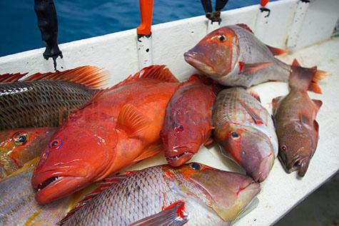 reef;fish;fishes;fishing;animal;animals;sea;ocean;marine;catch;caught;cachtching;fresh;food