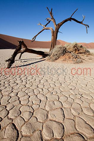 sand dune;sand dunes;dune;dunes;desert;deserts;african desert;african deserts;africa;african;namibia;hidden vlie;landscape;landscapes;african landscape;african landscapes;desert landscape;desert landscapes;sand;sands;sandy;deserted;dry;dry land;dry earth;drought;droughts;drought stricken land;water crisis;water restrictions;orange sand;orange sands;cloud;clouds;cloudy;day;daytime;day time;during the day;daylight;day light;sunlight;sun light;shadow;shadows;blue sky;blue skies;clear sky;clear skies;clear blue sky;clear blue skies;tree;trees;dead tree;dead trees;tree trunk;tree trunks;trunk;trunks;branch;branches;tree branch;tree branches;cracked earth;cracked dirt;close-up;close-ups;close up;close ups;closeup;closeups;close-up view;close-up views;closeup view;closeup views;close-up views;close-up views;close up views;closeup views;copyspace;copy space;textspace;text space;copyspace;copy space;textspace;text space