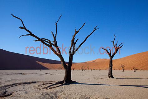 sand dune;sand dunes;dune;dunes;desert;deserts;african desert;african deserts;africa;african;namibia;hidden vlie;landscape;landscapes;african landscape;african landscapes;desert landscape;desert landscapes;sand;sands;sandy;deserted;dry;dry land;dry earth;drought;droughts;drought stricken land;water crisis;water restrictions;orange sand;orange sands;day;daytime;day time;during the day;daylight;day light;sunlight;sun light;shadow;shadows;blue sky;blue skies;clear sky;clear skies;clear blue sky;clear blue skies;tree;trees;dead tree;dead trees;tree trunk;tree trunks;trunk;trunks;branch;branches;tree branch;tree branches;close-up;close-ups;close up;close ups;closeup;closeups;close-up view;close-up views;closeup view;closeup views;copyspace;copy space;textspace;text space