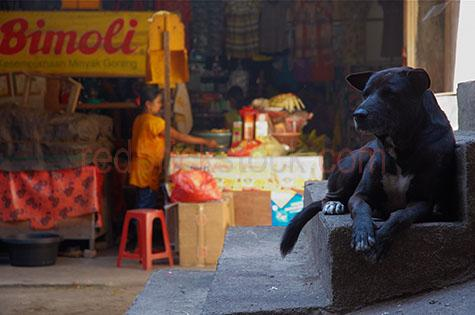 street scene;street scenes;streetscape;streetscapes;steps;step;stairs;stair;woman;women;one woman;one lady;ladies;bali;balinese;indonesia;indonesian;asia;asian;black dog;dog;dogs;canine;canines;animal;animals;pet;pets;homeless;home less;homeless animals;homeless animal;homeless animals;neglected animal;neglected animals;help;helpless;helpless animal;helpless animals;animals;humane;pets;pet;homeless dog;home less dog;stray;strays;stray animal;stray animals;stray dog;stray dogs