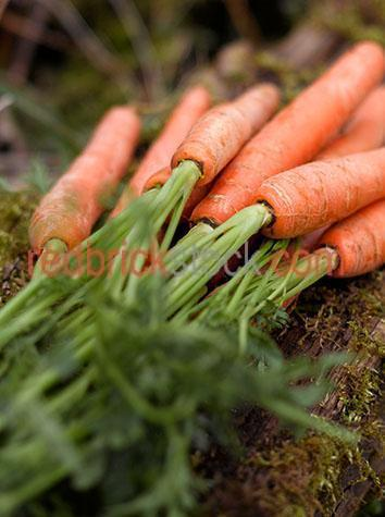 vegetable;vegetables;veg;veggies;veggie;carrot;carrots;bunch;bunches;fresh;freshly harvested;raw;uncooked;crop;crops;cropping;harvest;harvests;harvesting;harvested;produce;fresh produce;farm;farms;farming;farmer;farmers;farming industry;farming industries;vegetable farming;commercial farming;root vegetable;root vegetables