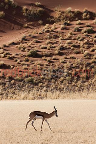 deer; deers; animal; animals; africa; african;namibia; hidden vlie; african deer; african deers; african animal; african animals; african wildlife; african wild life; safari; safaris; african safari; african safaris;sand dune; sand dunes; dune; dunes; desert; deserts; african desert; african deserts; landscape; landscapes; african landscape; african landscapes; desert landscape; desert landscapes; sand; sands; sandy; dry; dry land; dry earth; drought; droughts; drought stricken land; orange sand; orange sands; antler; antlers; deer antler; deer antlers; stag antler; stag antlers; wild deer; wild deers; wild animal; wild animals; wild; in the wild; deer in the wild; deers in the wild; animal in the wild; animals in the wild; hunt; hunts; hunting; hunter; hunters; deer hunt; deer hunts; deer hunting; deer hunter; deer hunters; terrestrial; terrestrial animal; terrestrial animals;terrestrial mammal; terrestrial mammals; mammal; mammals; deer portrait; deer portraits; animal portrait; animal portraits; venison; cervidae; wildlife; wild life; wildlife photography; wild life photography; nature; natural habitat; natural habitats;national park; national parks; protected area; protected areas; conservation; conservations; animal photography; warm tone; warm tones; tourist attraction; tourist attractions; african tourist attraction; african tourist attractions; tourist destination; tourist destinations; african tourist destination; african tourist destinations; tourism; tourism africa; african tourism; travel; travels; traveling; overseas travel; over seas travel; overseas; over seas; holiday; holidays; vacation; vacations; trip; trips; overseas holiday; overseas holidays; over seas holiday; over seas holidays; overseas vacation; overseas vacations; over seas vacation; over seas vacations; overseas trip; overseas trips; over seas trip; over seas trips; day; daytime; day time; during the day; in the daytime; in the day time; daylight; day light; side; sides; side view; side v