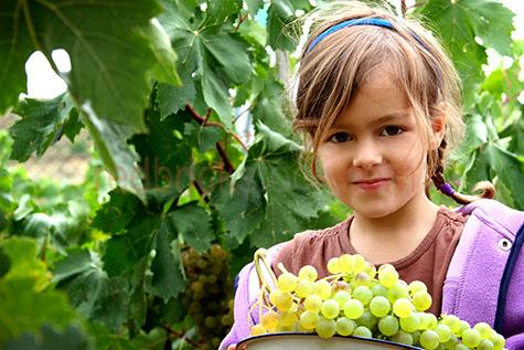young girl;young girls;girl;girls;young girl looking at camera;young girls looking at camera;girl looking at camera;girls looking at camera;kid;kids;child;children;children looking at camera;child looking at camera;kid looking at camera;kids looking at camera;little girl;little girls;girl with bowl of grapes;girls with bowls of grapes;young girl with bowl of grapes;young girls with bowls of grapes;girl picking grapes;girls picking grapes;girl picking fruit;girls picking fruit;child picking grapes;children picking grapes;child picking fruit;children picking fruit;fresh fruit;fruits;fruit;grape;grapes;fruit farm;girl on farm;girls on farms;little girl on farm;little girls on farms;5-10 years;5 to 10 years;5-10 yrs;5 to 10 yrs;10-15 years;10 to 15 years;10-15 yrs;10 to 15 yrs;grapevine;grape vine;grapevines;grape vine;one girl;one little girl;one child;one kid;one person