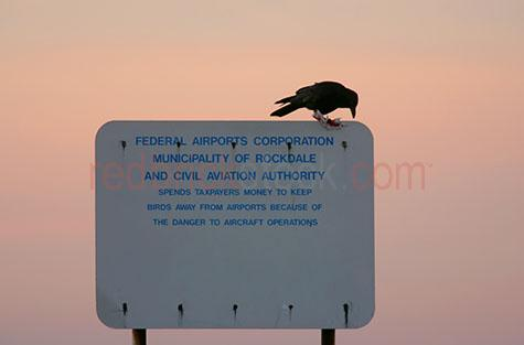 airport;airports;aviation;crow;crows;bird;birds;one bird;single bird;black bird;black birds;scavenge;scavenger;scavengers;sign;signs;signage;warning;contradiction;contradicting;notification;notify;notifies;taxpayers money;clear sky;clear skies;sunset;sunsets;sun set;sun sets;sunrise;sunrises;sun rise;sun rises
