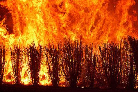 cane;sugar cane;cane burn off;cane burn-off;burning off sugar cane;sugar cane burning;sugar cane fire;sugar cane production;sugar cane industry;sugar cane growing;agriculture;bushfire;bushfires;bush fire;bush fires;fire;fires;grass fire;grass fires;burning off; back burning;back burn;back burns; outback;out back;country;country setting; country settings;smoke;heat;hot;heat wave; heat waves;flame;flames;disaster;natural disaster;natural disasters;scorch;scorched;scorches; scorching;australia;australian;aus;wildfire;wild fire;wildfires;wild fires;mother nature;environmental;environment;forest;forests;carbon;global warming;climate change;temperature;temperatures;high;forest fires;forest fire;embers;fire at night;fires at night; copy space;copy spaces;text space;text spaces;orange;oranges;colour orange;color orange;danger;dangers;dangerous;queensland;nth qld;north queensland;north qld;qld;australia;australian;