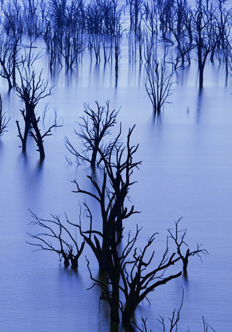 australia;lake hume;murray river;new south wales;nsw;dead trees;drought;dry;lake;trees;lakes;global warming;climate change