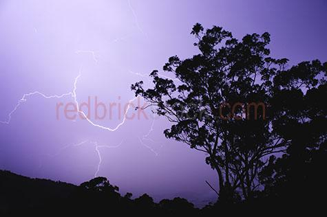 lightning;lightning bolt;lightning bolts;lightning bolt;lightning bolts;electricity;electric;electrical storm;electrical storms;storm;storms;stormy;stormy weather;stormy sky;stormy skies;sky;skies;weather;severe weather;bad weather;thunder;thunder storm;thunder storms;thunderstorm;thunderstorms;electrical surge;electrical surges;surge;surges;night;night time;at night;evening;twilight;darkness;dark;dramatic;dramatic sky;dramatic skies;moody;moody setting;moody settings;moody sky;moody skies;danger;dangerous;purple;purples;colour purple;color purple;purple sky;purple skies;tree;trees;eucalyptus tree;eucalyptus trees;eucalyptus;hill;hills;mountain;mountains;mountainside;mountainous;maintain range;mountain ranges;landscape;landscapes;silhouette;silhouettes;silhouetted;silhouetted tree;silhouetted trees;silhouetted hills;silhouetted mountains;silhouetted mountain range;silhouetted mountain ranges;silhouetted landscape;silhouetted landscape;land;mt nebo;mount nebo;mountain nebo;d'aguilar range: daguilar range;queensland;qld;australia;australian;aus;nature;natural;weather condition;weather conditions;forest;forests;rainforest;rainforests;silhouetted forest;silhouetted forests;silhouetted rainforest;silhouetted rainforests;copyspace;copy space;textspace;text space