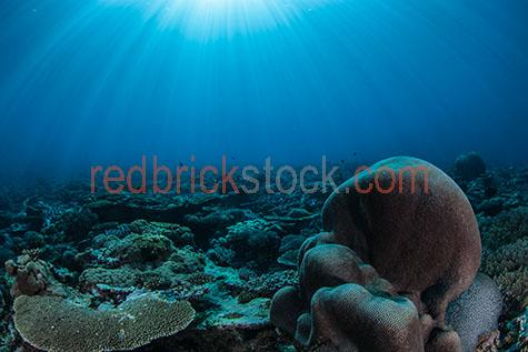 coral;corals;soft coral;soft corals;hard coral;hard corals;coral reef;coral reefs;reef;reefs;nature;maritime;marine;ocean;oceans;ocean water;ocean waters;sea;seas;sea water;sea waters;water;waters;blue water;waters surface;below the surface;marine life;sea life;sealife;aquatic;natural habitat;natural habitats;wildlife;wild life;swim;swims;swimming;fish;fishes;anemone;anemones;anemone fish;anemone fishes;clownfish;clownfishes;clown fish;clown fishes;underwater;under water;underwater photography;under water photography;animal;animals;sea animal;sea animals;sea creature;sea creatures;creature;creatures;seascape;seascapes;shallow;shallow water;snorkel;snorkels;snorkeling;snorkelling;colourful;tourist attraction;tourist attractions;tourist destination;tourist destinations;australian tourist attraction;australian tourist attractions;australian tourist destination;australian tourist destinations;queensland tourist attraction;queensland tourist attractions;queensland tourist destination;queensland tourist destinations;qld tourist attraction;qld tourist attractions;qld tourist destination;qld tourist destinations;great barrier reef tourist attraction;great barrier reef tourist attractions;australia;australian;aus;queensland;qld;north queensland;north qld;nth queensland;nth qld;pacific ocean;great barrier reef;swains reef;sunlight;sun light;sunray;sunrays;sun ray;sun rays;ray of light;rays of light;sunbeam;sunbeams;sun beam;sun beams;explore;explores;exploring;exploration;exploring underwater;exploring under water;close-up;close-ups;close up;close ups;closeup;closeups;close-up view;close-up views;closeup view;closeup views;close-up views;close-up views;close up views;closeup views;copyspace;copy space;textspace;text space